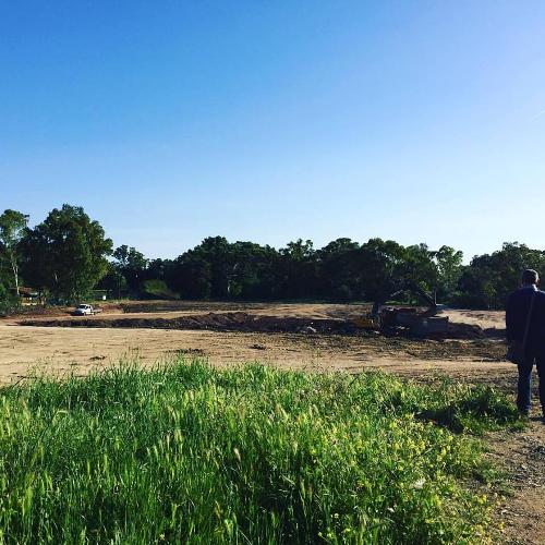 Moradores do Bairro da Boavista foram surpreendidos com corte de árvores no Parque Florestal de Monsanto.