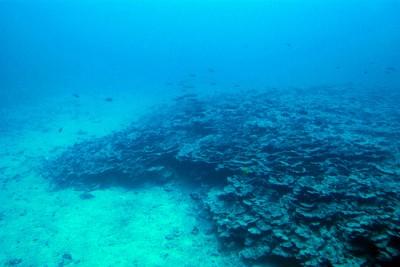 """""""Uma acidificação tão acelerada pode acarretar uma grande perda de espécies marinhas, como moluscos, algas e corais"""" - Foto de rocketlass/flickr"""