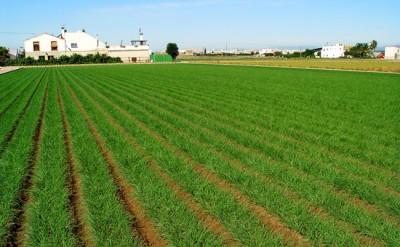 Cientistas reclamam o seu lugar na luta pela segurança alimentar