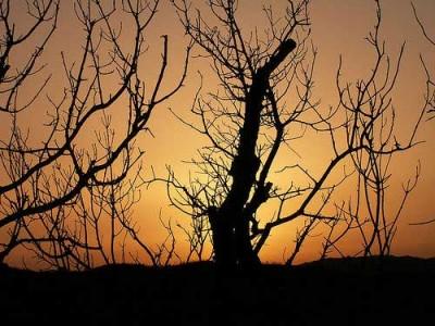 """Pedro Soares diz que """"o ministro tinha que trabalhar durante todo o inverno para se conseguir evitar, ou pelo menos diminuir, a incidência dos fogos florestais no verão"""". Foto Valter Jacinto/Flickr"""