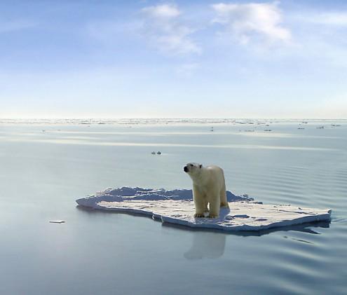 Urso polar num iceberg a derreter.