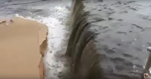 Águas sujas e ratazanas mortas levam à interdição da praia — Carcavelos