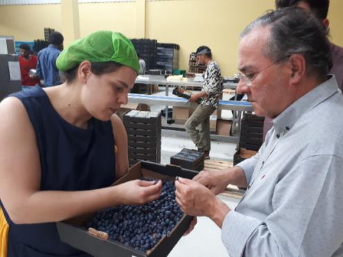 Agricultores de Lafões reuniram-se com o deputado Carlos Matias para procurarem soluções que enfrentem a perda de 80% da produção de pequenos frutos daquela região – Foto esquerda.net