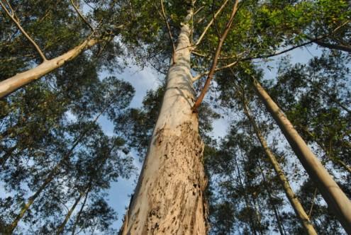BE diz que ainda é preciso avançar muito mais na reforma florestal