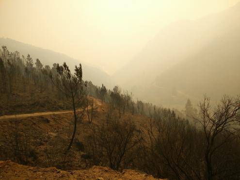 """Produtores florestais denunciam """"cenário de pós-guerra"""" e apoios insuficientes"""
