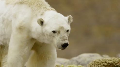 O Ártico não voltará a congelar