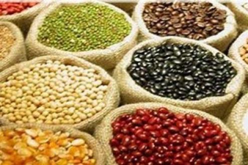 Resultado de imagem para sementes patenteadas india