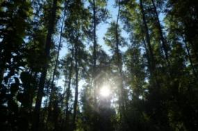 Greve de guardas-florestais com adesão entre 50 a 70%