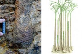 Ilustração do cientista Chris Berry, da Universidade de Cardiff, publicada no www.livescience.com.