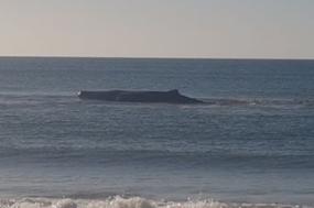 O cachalote foi avistado na praia de Monte Gordo cerca das 8h da manhã