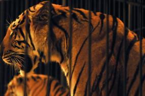"""O Bloco justifica a proibição da utilização de animais selvagens em circos com """"a preocupação crescente com o bem-estar animal""""."""