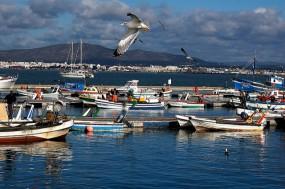Bloco quer mais investimento na Pesca. Foto Natura Algarve/ Flickr