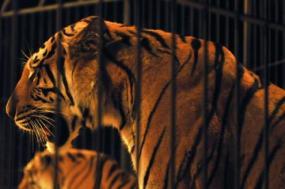 Bloco de Esquerda defende a proibição da utilização de animais selvagens em circos