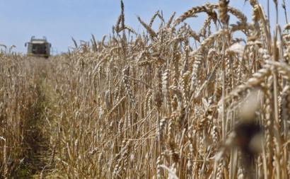 Agricultura. Foto de DEWEGGIS/Flickr.