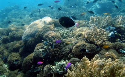 Peixes tropicais no Bornéu. Foto de William Warby/Flickr.