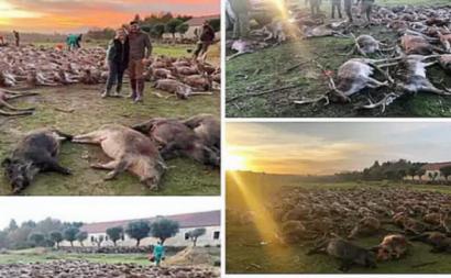 Imagem partilhada pelo grupo de caçadores responsável pelo abate dos 540 animais na Torre Bela.
