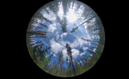 árvores e céu