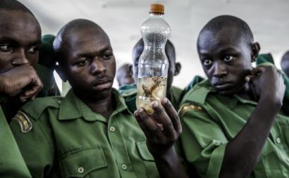 Oficiais do Serviço Nacional da Juventude observam gafanhotos do deserto durante formação para controlo desta espécie, em Gilgil, Quénia. Fotografia por FAO/Luis Tato.