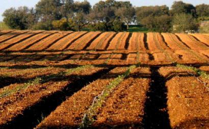 Campo agrícola. Foto de Américo Meira/Flickr.