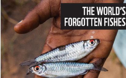 Pormenor da capa do estudo Os peixes esquecidos do mundo.