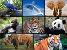 """""""Há anos, na Índia, havia mais de 150 mil tigres e atualmente em todo o mundo há apenas dois mil, que vivem em jardins"""", revela Martínez Alier. Fotomontagem de Colaweb"""