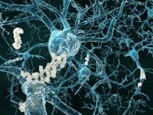Estudo revela que a progressão da doença pode ser travada. Foto da Alzheimer Portugal
