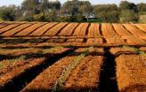 Campo agrícola. Foto de Américo Meira/Flickr