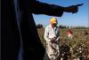 Trabalho forçado no Uzbequistão. Foto de Anti-Slavery.org.