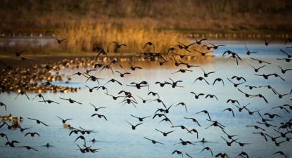 Aves no Estuário do Tejo.