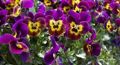 Flores. Foto de Patrick Nouhailler/Flickr.