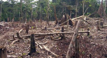 Destamamento para exploração agrícola na Amazónia. Foto: Matt Zimmerman/Flickr.