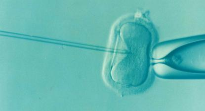Fertilização in vitro. Imagem de DrKontogianniIVF/Wikimedia Commons.