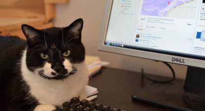 Gato ao computador. Foto de Steve/Flick.