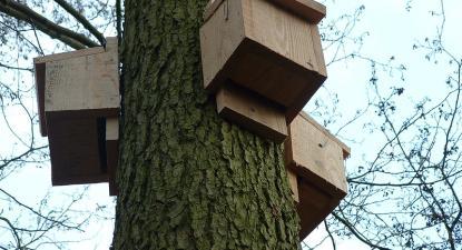 Caixas abrigo para morcego. Foto de Dave/Flickr.