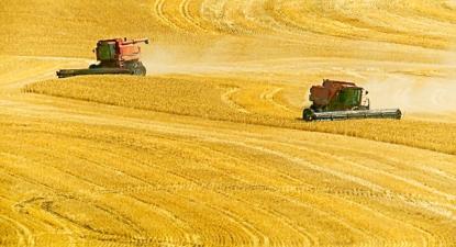 Colheita de trigo em Wasco County, Oregon, 2016. Foto: Jim Choate/Flickr.