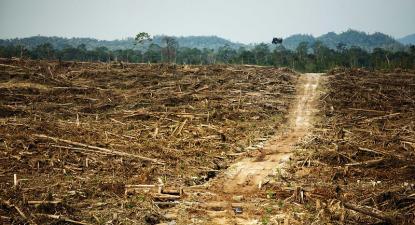 Destruição de floresta causada pela Duta Palma. Bornéu, 2011.