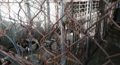 Foto do canil de Ourém, publicada a nove de janeiro no Facebook de Ricardo Rodrigues que denunciou a situação.