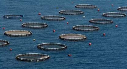A sustentabilidade da aquacultura afigura-se como uma ilusão