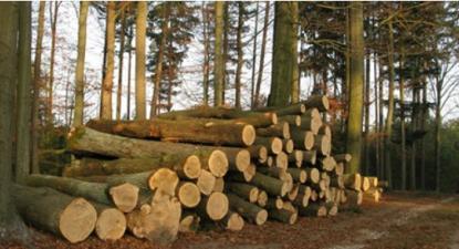 Zero pede suspensão de novas centrais de biomassa - Foto de Interior do Avesso
