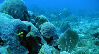 Recifes de coral – foto de NOAA's National Ocean Service marcado com CC PDM 1.0