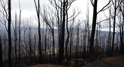 Floresta ardida. Foto de Paulete Matos.