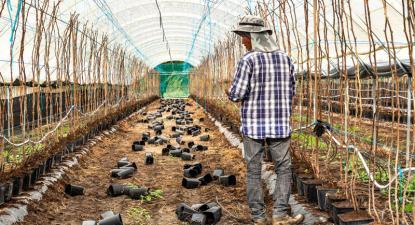 Trabalhador em exploração agrícola no Alentejo