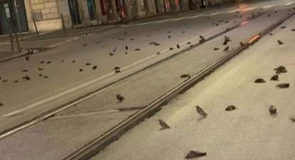 Aves mortas em Roma depois da passagem de ano. Foto da OIPA.
