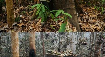 O mesmo lugar, antes e depois do fogo. Fotos do Facebook de Erika Berenguer.