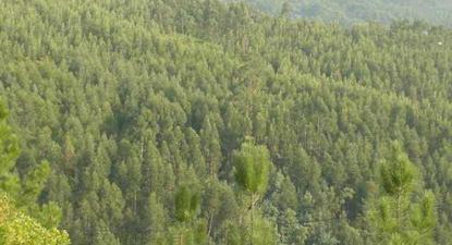 Guardas-florestais em greve por descongelamento de progressões e promoções