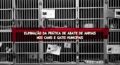 Propostas do Bloco para o bem-estar animal   ESQUERDA.NET