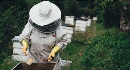 Sem apoios, num ano em que nem a produção de própolis escapou, a esperança é o mel de montanha – Foto de Interior do Avesso
