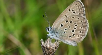 Portugal tem 135 espécies de borboletas diurnas. Foto do site natureza