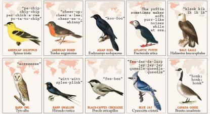 50 espécies de pássaros e os sons que fazem