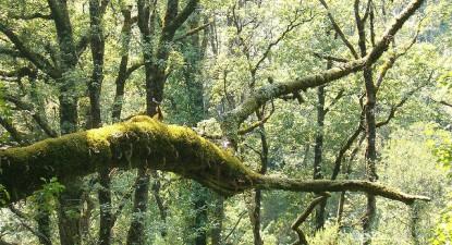 GEOTA apresenta propostas para a reforma florestal. Foto de Pedro Dias/Flickr